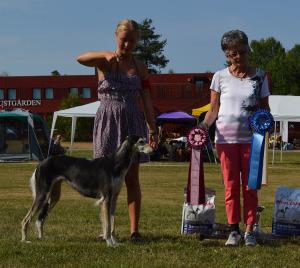 Xass Farah Eurydike BOB Working dog Tammsvik 20140726-l